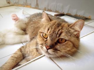 Cat&Kitten