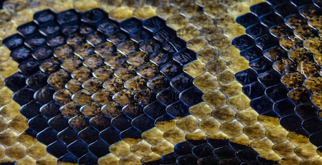 texture boa snake shadow skin from alive body beautiful