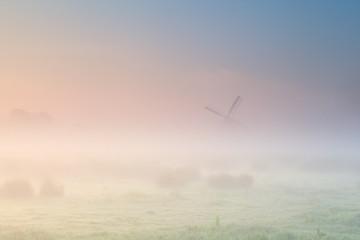 foggy sunrise over Dutch farmland with windmill