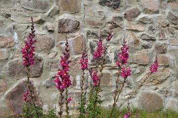Blumen vor Natursteimmauer