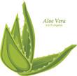 Aloe vera isolated on the white