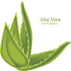 Aloe vera isolated on the white