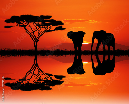 canvas print picture elephants in the junglee