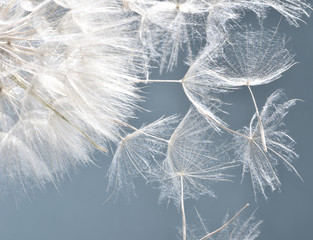Dandelion clock: wishes and dreams    :) © doris oberfrank-list