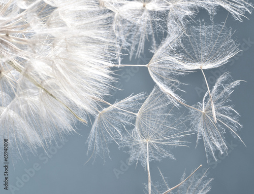 Dandelion clock: wishes and dreams    :) - 65948008