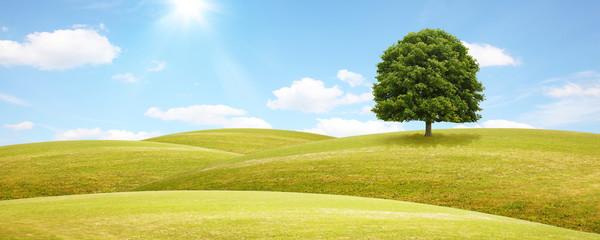 Baum auf einem Hügel