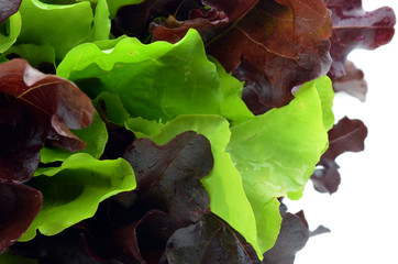 fresh green lettuce leaves
