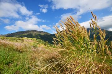 Grass Meadows on Mountains