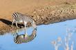 Zebra Waterhole Mirror Double Wildlife Animal
