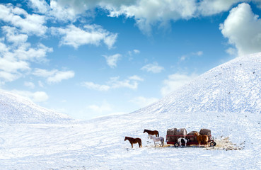 Horses out on snow covered field