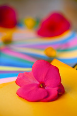 Red and pink flowers on layers of colorful papers