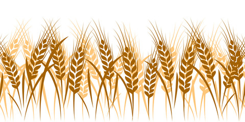 Wheat seamless pattern background vector ,illustration