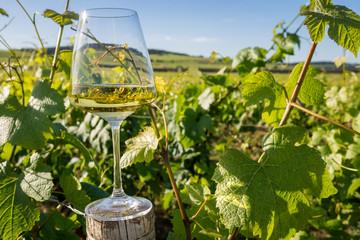 verre de vin dans les vignes