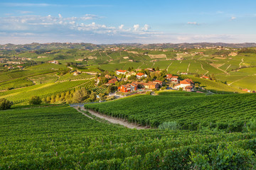 Small village among green vineyards at sunset.