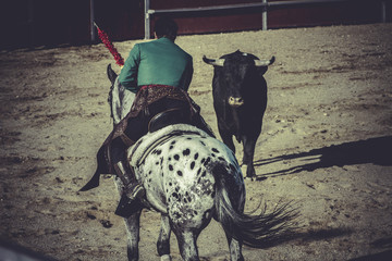 bullfight, traditional Spanish party where a matador fighting a