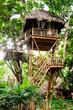 Traumhaus: Baumhaus im Tropischen Regenwald :)