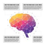 Fototapety Human Brain - Colored Polygon Infographic Illustration