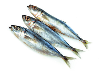 fresh sardine on white background
