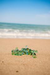sahilde cam bilye