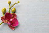 Fototapety Orchid background.