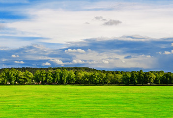 Green field with trees under the bright blue sky
