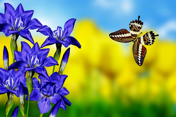 iris flowers and butterfly