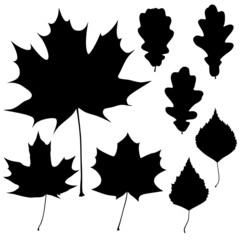 Set of eight vector black leaves outline