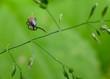 Leinwanddruck Bild - interested tick, grass