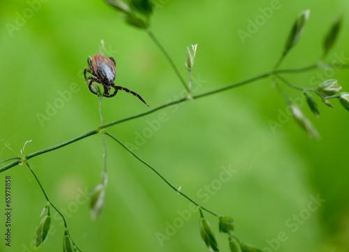Leinwanddruck Bild interested tick, grass
