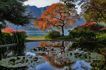 Tree reflection amongst the water lilies