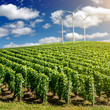 Vineyard landscape with wind generators