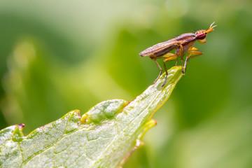 Viewpoint für Insekten