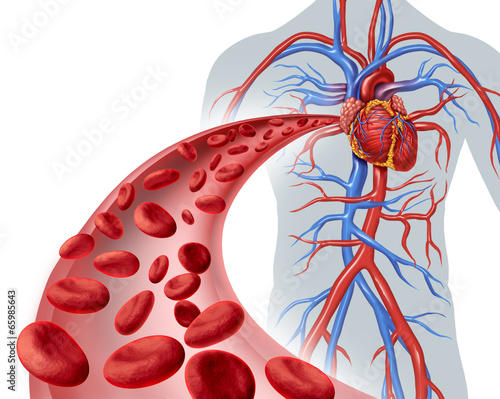 Leinwandbild Motiv Blood Heart Circulation
