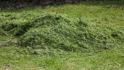 Sweep grass