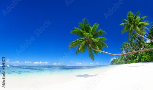 Tropical Paradise - 65988275