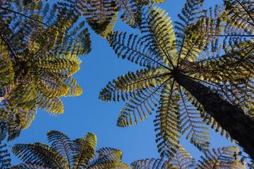 gigantic ferns growing in rainforest