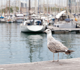 seagull on a background of the port