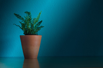 House Plant on tabel