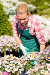 Garden center woman check daisy flowerbed