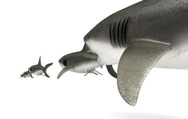 New Economy - Predatore, catena alimentare