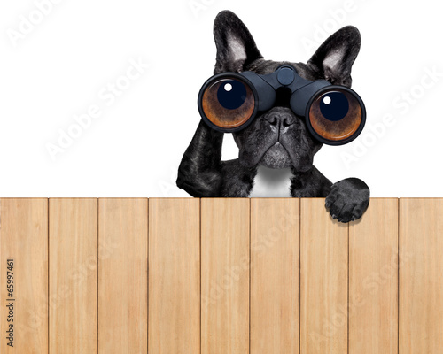 canvas print picture dog looking through binoculars