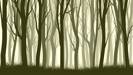 Horizontal illustration with many trunks tree.