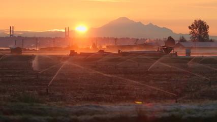 Sunrise Mist, Richmond Cranberry Field