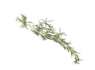 Twig of rosemary.