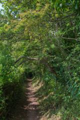 Arched Path Through The Forest