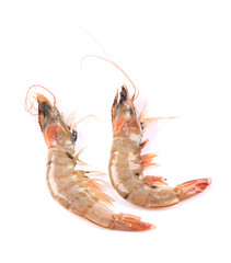 Two tiger shrimps.