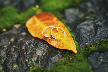 Two wedding-ring on yellow foliage