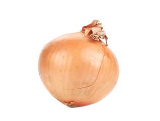 Ripe fresh onion.