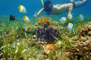 Man in snorkel underwater looks colorful sea life