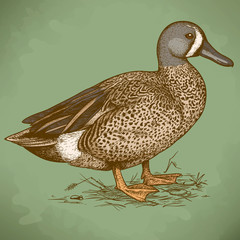 vector engraving duck in retro style